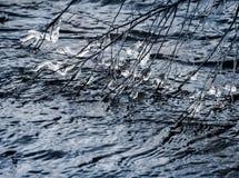 Cristais de gelo do rio no ramo de árvore de Frm da aproximação amigável da mola foto de stock royalty free