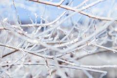 Cristais de gelo dos ramos Fotografia de Stock
