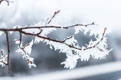 Cristais de gelo em ramos de árvore Fotografia de Stock Royalty Free