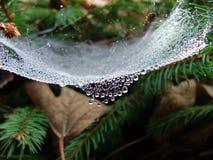 Cristal Image libre de droits