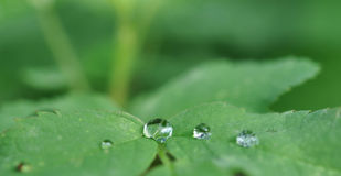 Cristal clear drops Royalty Free Stock Photos