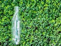 Cristal de botellas en fondo verde Fotos de archivo