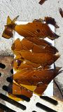 Cristal de botellas quebrado agudo por el dren oxidado de la tormenta en estacionamiento imágenes de archivo libres de regalías