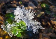 Cristal de gelo Imagens de Stock Royalty Free