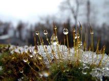 Cristal de gelo Fotografia de Stock