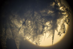 Cristal de glace. Image libre de droits