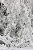 Cristal del hielo Fotografía de archivo libre de regalías