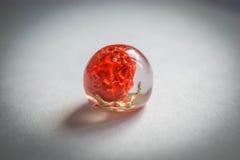 Cristal feito da resina de cola Epoxy com plantas Imagens de Stock Royalty Free