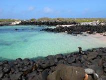 Cristal - oceano desobstruído com selos em rochas Imagens de Stock Royalty Free