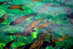 Cristal vatten för fiskarna Royaltyfri Fotografi