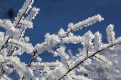 Cristales blancos de la helada en las ramas Imágenes de archivo libres de regalías