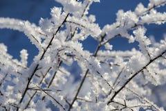 Cristales blancos de la helada en las ramas Fotografía de archivo