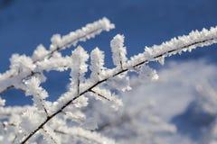 Cristales blancos grandes de la helada en las ramas Fotografía de archivo libre de regalías
