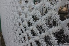 Cristales de hielo en la cerca imagen de archivo libre de regalías