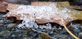Cristales de hielo en una hoja de arce Fotografía de archivo