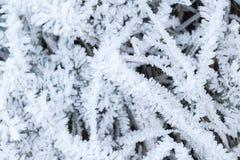 Cristales de la hierba verde de la cubierta de la helada Foto de archivo libre de regalías