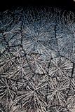 Cristales del ácido ascórbico   Imagen de archivo libre de regalías