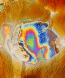 Cristales del ácido ascórbico fotos de archivo