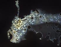 Cristales hermosos de la vitamina c foto de archivo libre de regalías