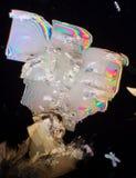Cristalli dell'allume di potassio Fotografia Stock Libera da Diritti