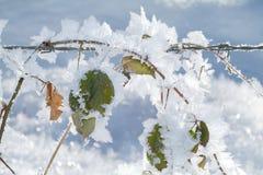 Cristalli di ghiaccio Fotografie Stock