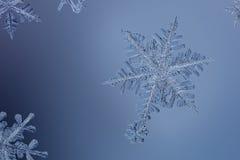 Cristalli di ghiaccio sul blu Fotografia Stock
