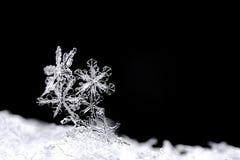 Cristalli di neve sul dettaglio nero Fotografia Stock