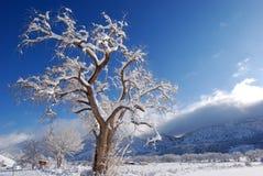 Cristallo dell'albero Fotografia Stock