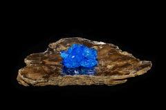 Cristallo di Chalcithite su mica Fotografia Stock Libera da Diritti