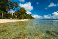 Cristallo poco profondo - spiaggia incontaminata selvaggia dell'acqua libera Fotografie Stock Libere da Diritti