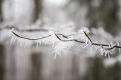 Cristals льда Стоковые Фото