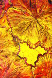 Cristaux colorés d'acide citrique photographie stock