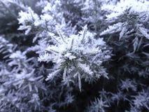 Cristaux d'hiver Images libres de droits
