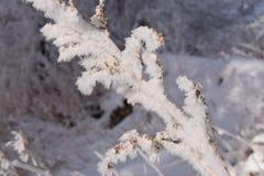 Cristaux de Frost images libres de droits