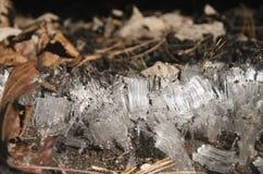 Cristaux de glace Photo stock