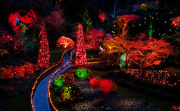 Cristmas night lights in the garden royalty free stock photography