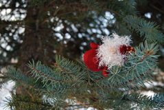 Cristmas toy on the tree Stock Photography