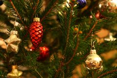 Cristmas tree branches Royalty Free Stock Photography