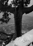 Cristo el árbol del redentor Foto de archivo
