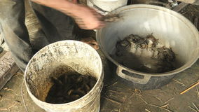 Critique despiadadamente al cazador, cazar cangrejos, cangrejos, colector del cangrejo metrajes