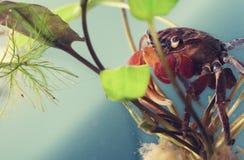 Critique despiadadamente como un insecto Fotografía de archivo