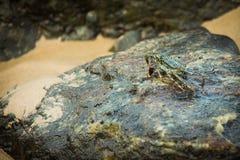 Critique despiadadamente sentarse en una roca en una bahía del océano imagen de archivo libre de regalías