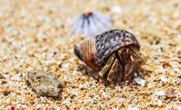 Critter пляжа стоковые фотографии rf