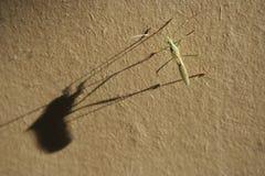 Critter утра Стоковые Фото