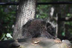 Critter adorable que descansa sobre un registro grande Imagenes de archivo