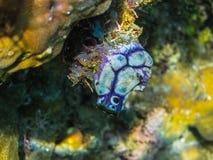 critter blanco azul en el mar Fotos de archivo libres de regalías