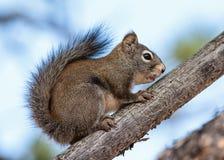 Critter della famiglia dello scoiattolo immagine stock libera da diritti