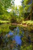 Crna vår i den Logarska dalen var den Savinja floden påbörjar royaltyfria bilder
