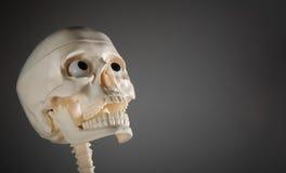 Crâne humain Photo stock