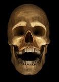 Crâne sur le noir Photographie stock